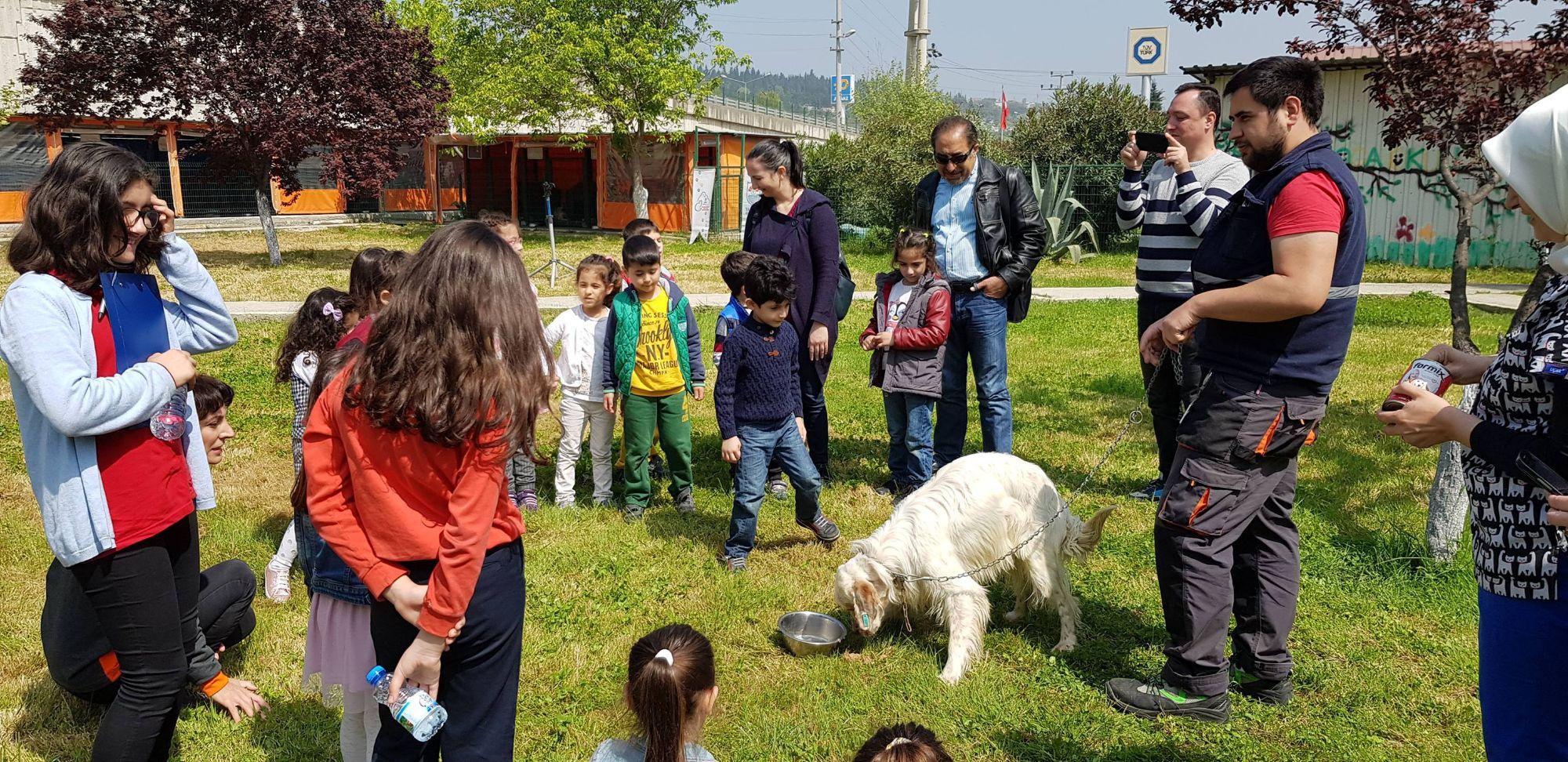 127 sokak hayvanı sahiplendirildi