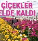 Çiçek üreticisine korona darbesi
